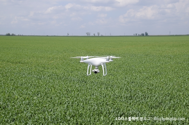 Flying white quadrocopters over a field of wheat. Flying gadget for video.