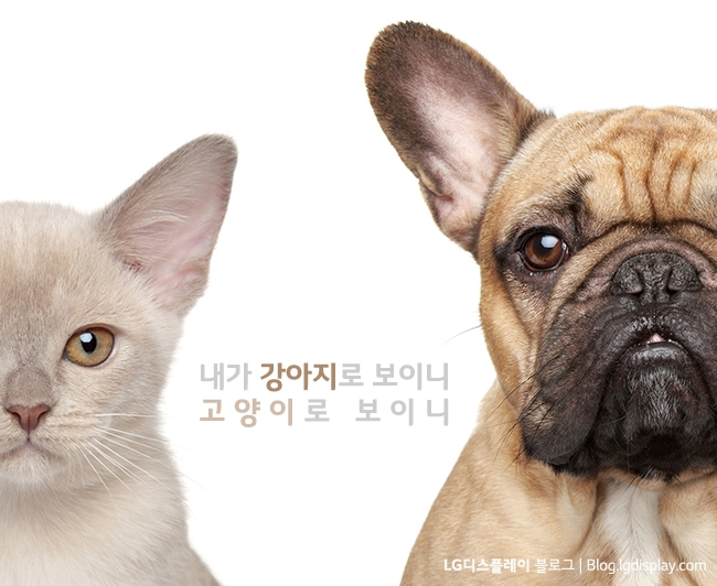 Cat and Dog. Half of muzzle close-up portrait isolated on white background